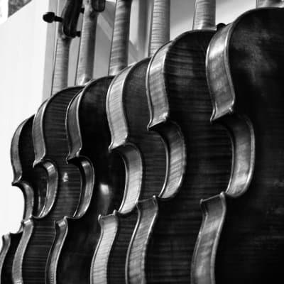 fine violins and violas hanging in a violin shop